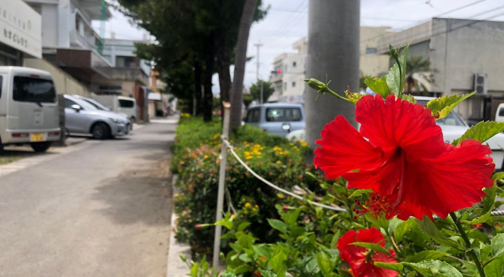 なかよし食堂前に咲くハイビスカス