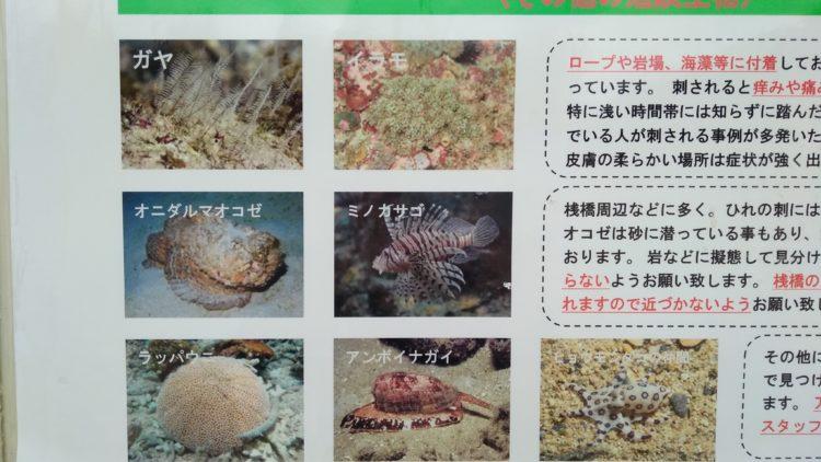 石垣島の危険生物