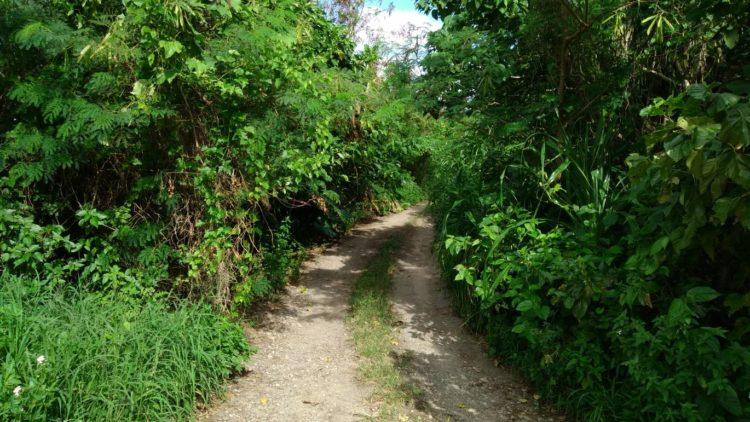 川平タバガーの道のり 石垣島PR情報局