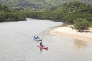 石垣島の吹通川でマングローブカヌー