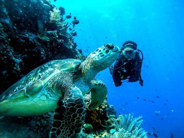 ウミガメと女性ダイバーのツーショット
