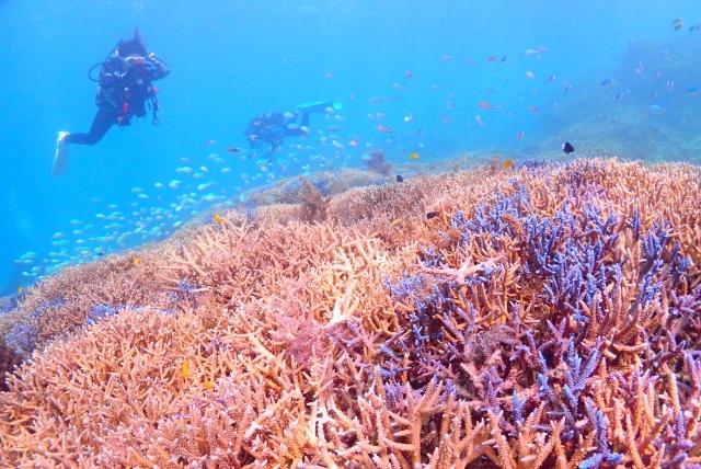 石垣島のサンゴとダイビング