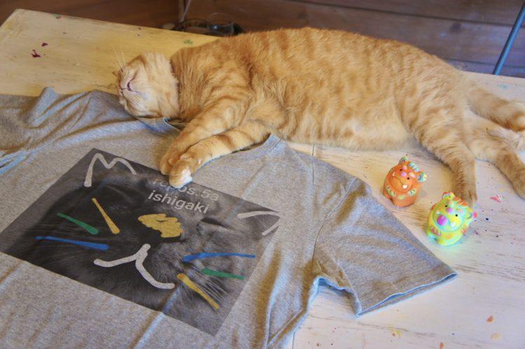 Tシャツと猫