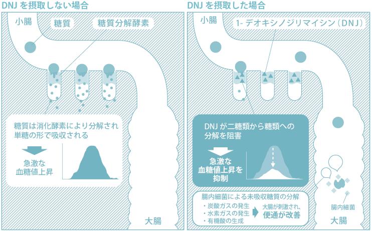 DNJの図解